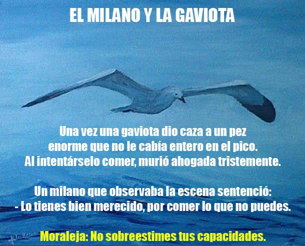 EL MILANO Y LA GAVIOTA