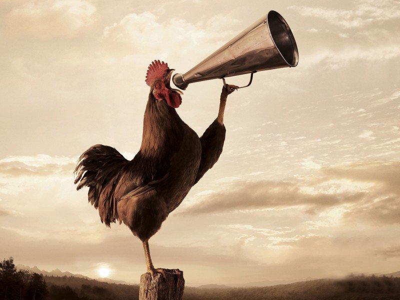 Resultado de imagen para el gallo de la viuda